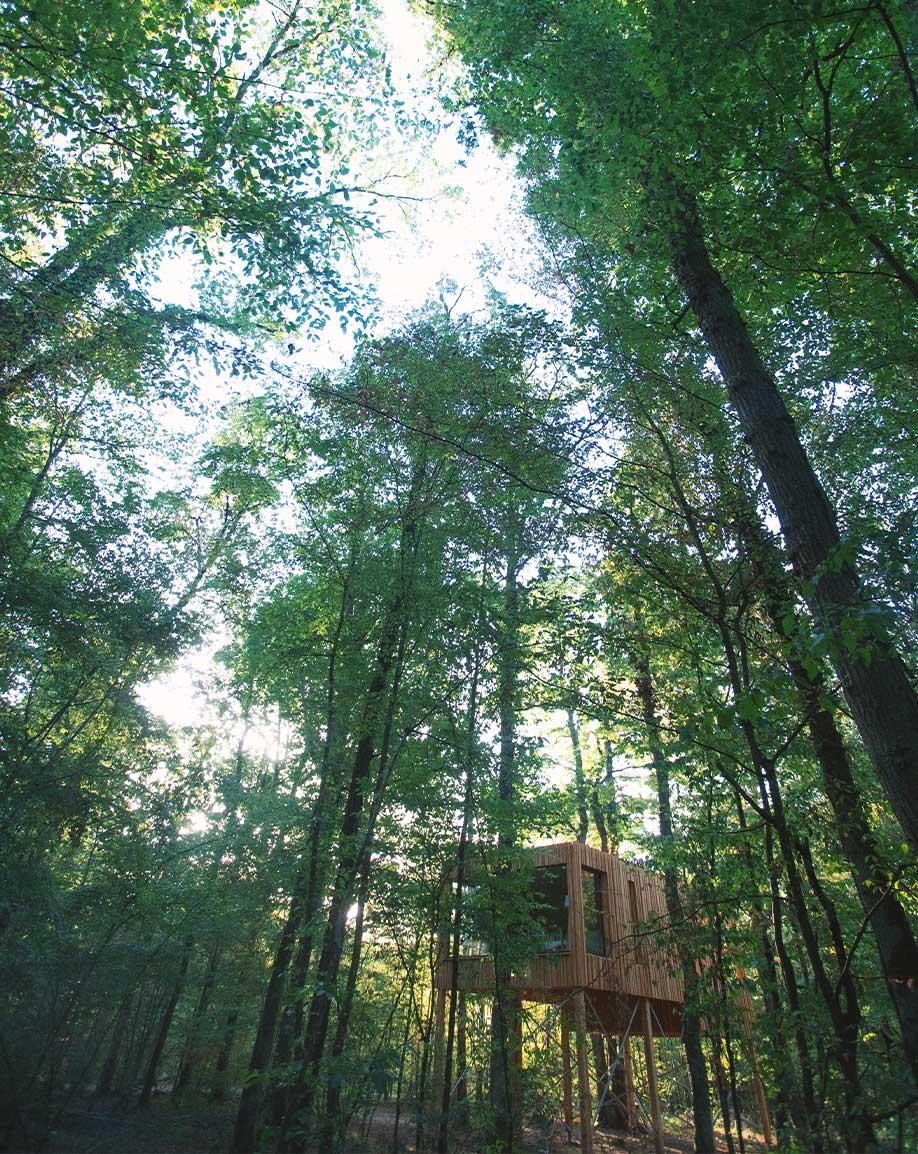 Un lodge perché dans les arbres