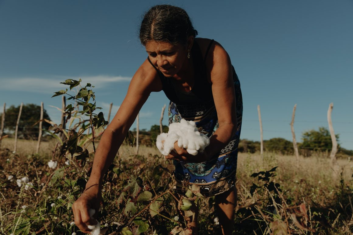 VEJA utilise du coton issu de l'agro-agriculture