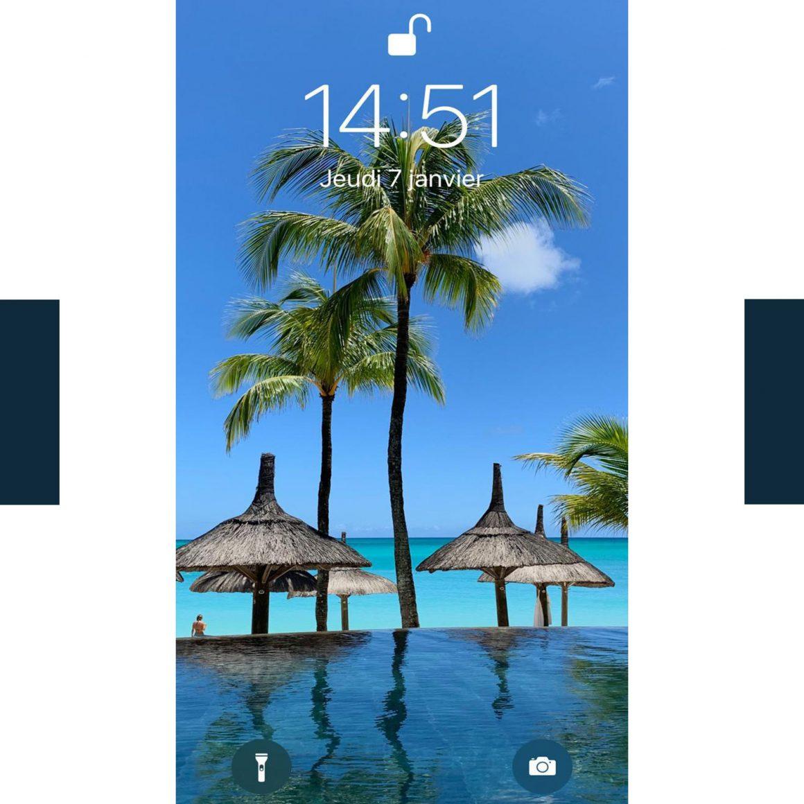Les palmiers du fond d'écran du téléphone de David Lucas