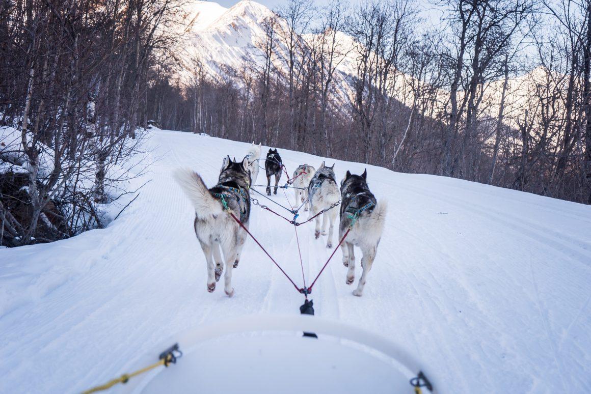 Balade en montagne avec chiens de traineau