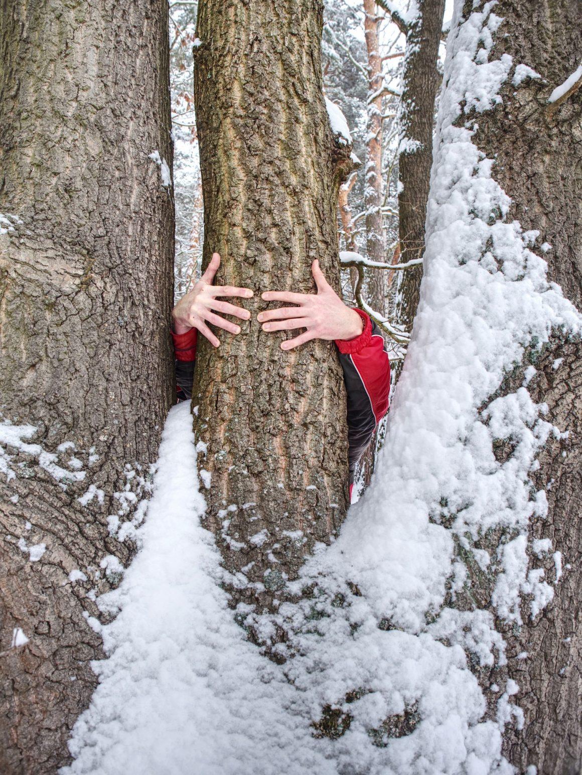Bain de forêt grâce à la Sylvothérapie
