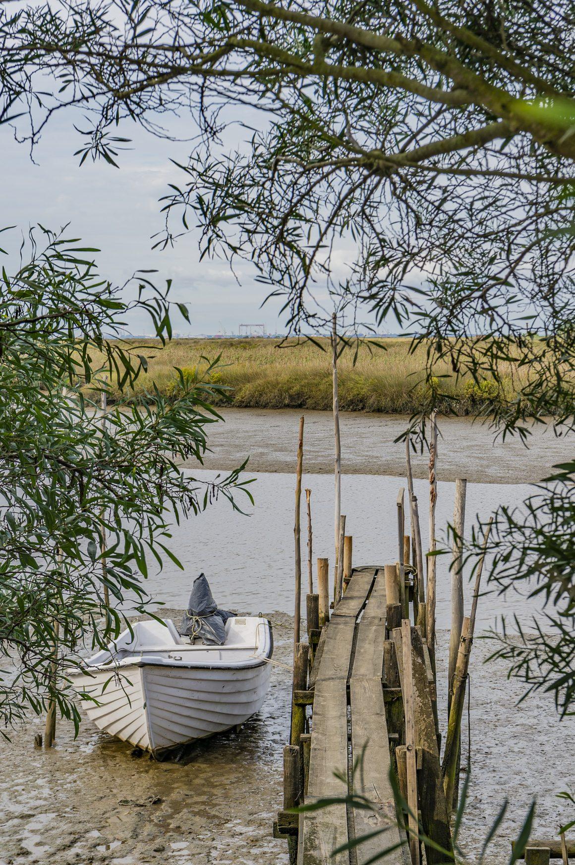 Retour à l'état sauvage dans l'Estuaire du Sado