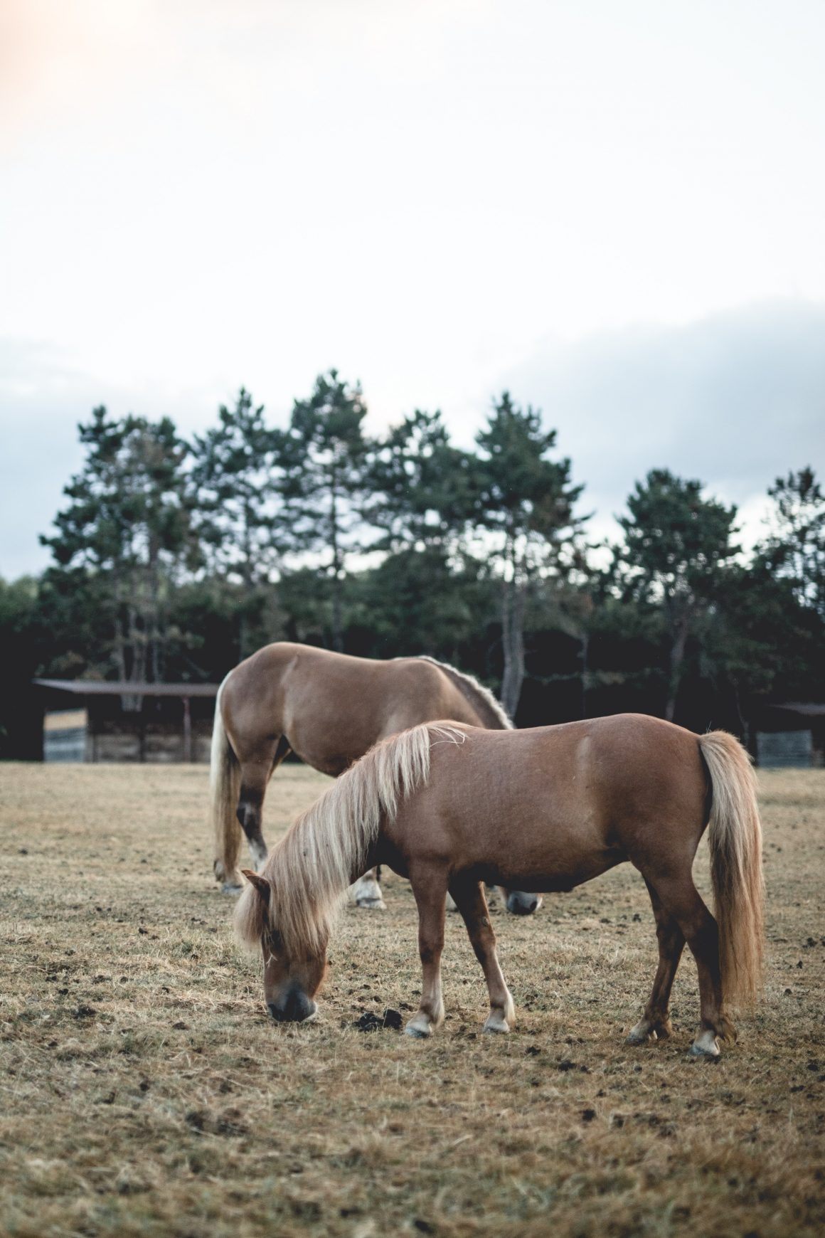 Des chevaux au Barn Hotel