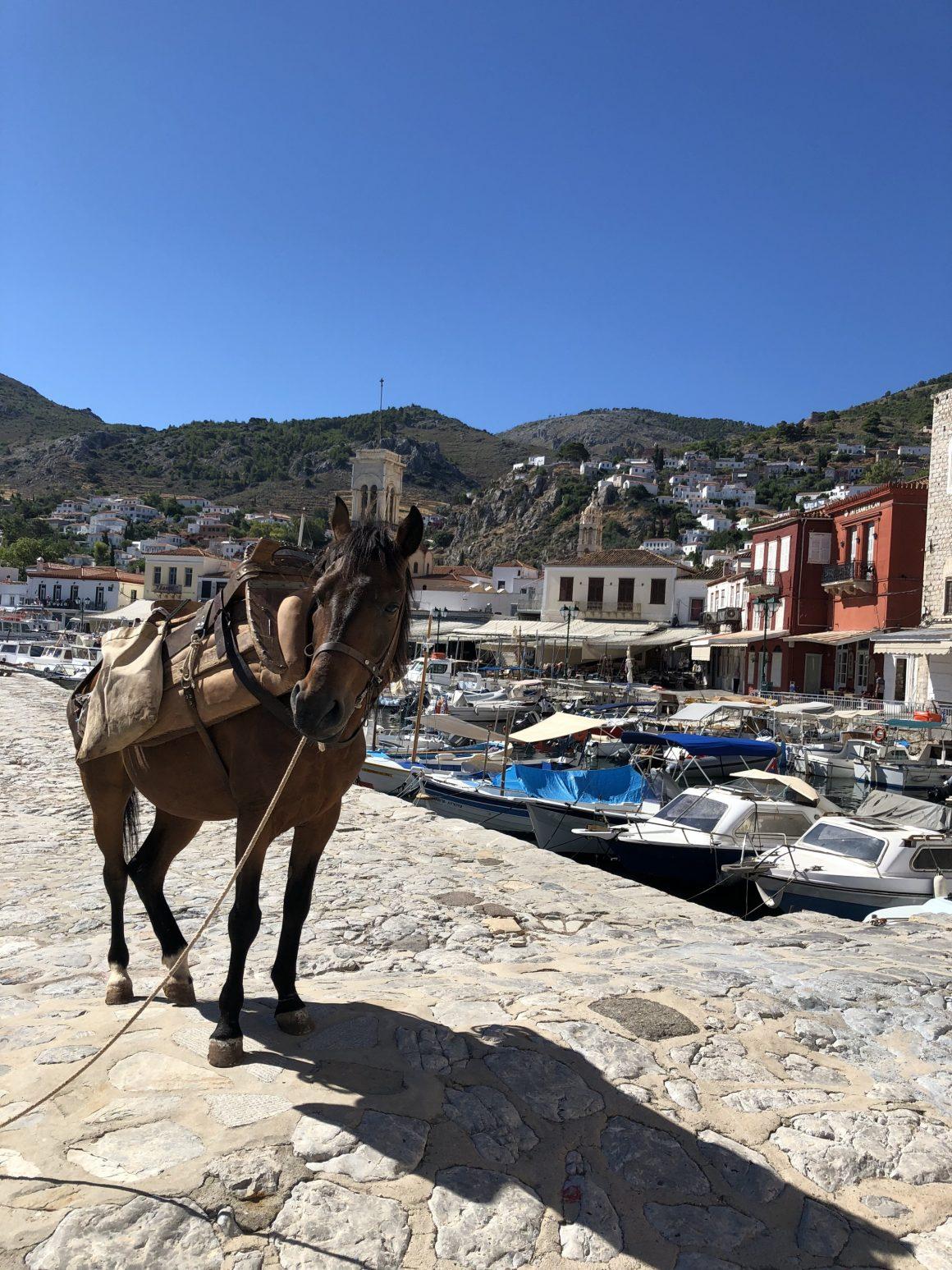 Un cheval et des bateaux sur l'île Hydra en Grèce