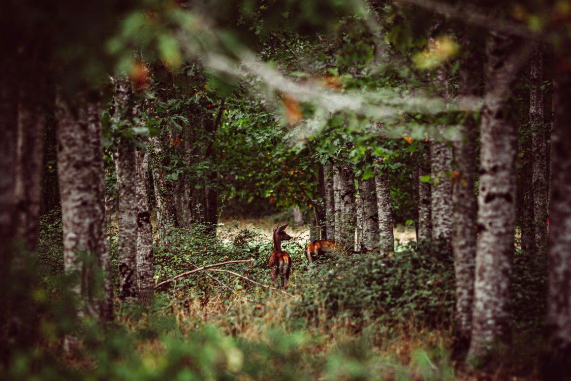 Le Parc de 8 hectares du Domaine de la Trigalière